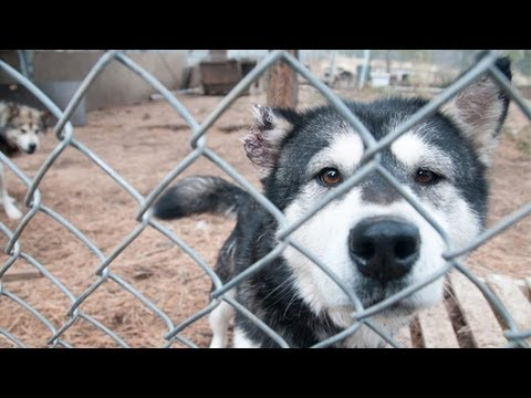 Operation Montana Malamute Rescue