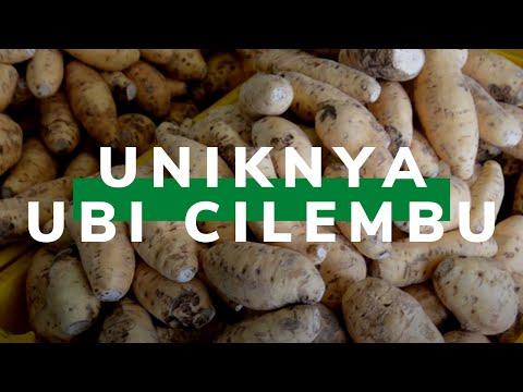 Ubi Cilembu, Bukti Kekayaan Sumber Daya Genetik Pertanian Indonesia