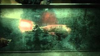 Resident Evil Revelations - Case File #3: Infect