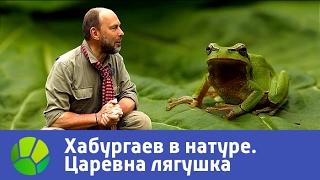 Царевна лягушка. Хабургаев в натуре | Живая Планета