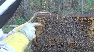 Making a split on a hive over 6 million folks have seen.