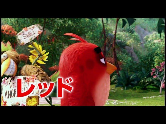 3D映画『アングリーバード』日本版15秒予告映像