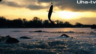 Зимняя рыбалка в Астрахани на Судака