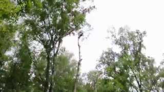 Валка и удаление дерева по частям. Арбористы, промышленные альпинисты(, 2015-07-03T21:08:59.000Z)