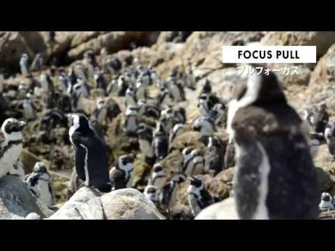 カメラワーク - FOCUS PULL (プルフォーカス)   動画編集・映像制作