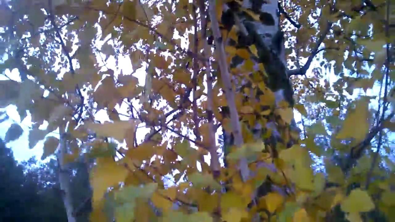 Картинки Осень Поздняя Ноябрь