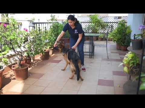 TEACH DOG SIT AND DOWN COMMANDS