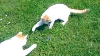 Приколы:смешное видео про котов!100%ржач...
