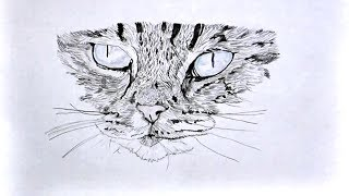 Gambar cover Drawing of a cat (took 1 hour 10 minutes)