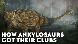 How Ankylosaurs Got Their Clubs