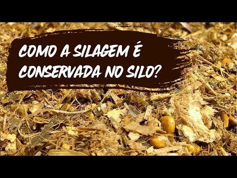 Como A Silagem é Conservada No Silo?