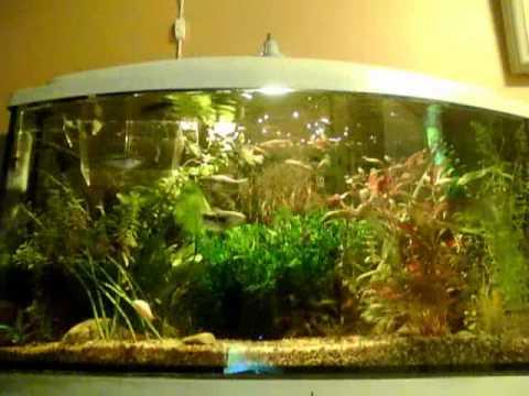 my 100 litre fishtank youtube. Black Bedroom Furniture Sets. Home Design Ideas