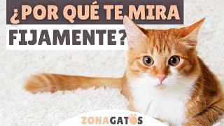 ¿Tu gato TE MIRA FIJAMENTE? ➡ Estos son los 5 MOTIVOS