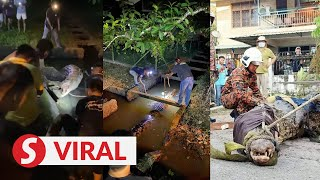 Man says he shot crocodile in Limbang