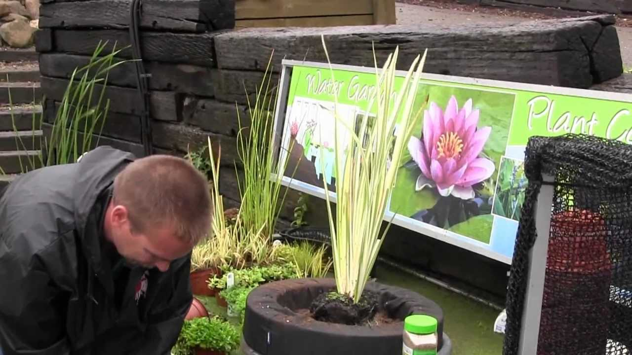 Rohr Nursery- Planting a floating island for your pond - YouTube