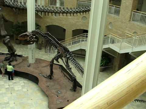 Argentinosaurus Dinosaur Skeleton Part 1 @ Fernbank Museum, Atlanta