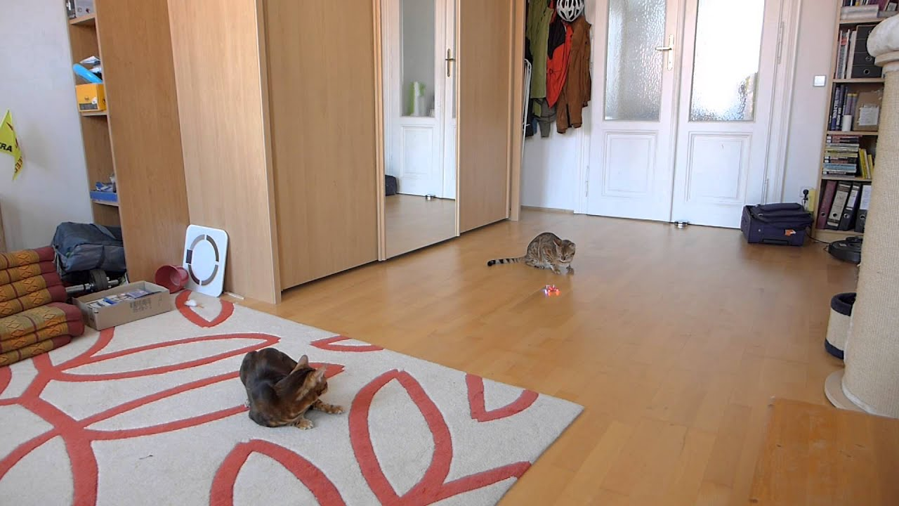 Katzen Mit Quadrocopter