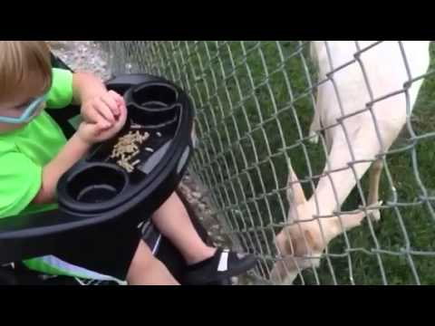 TyTy at petting zoo 7/31/14