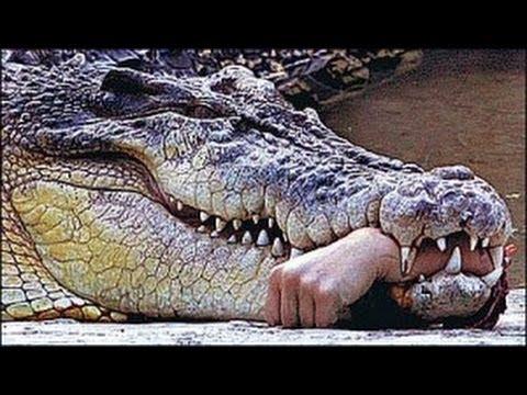 【衝撃映像:動物】色んな動物に人間がフルボッコにされる動画を集めてみました♪ | 閲覧注意 グロッティマンデー