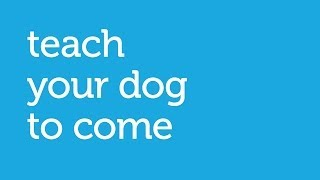 How To Teach Your Dog To Come When Called (petco)