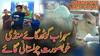 Sohrab Goth Cow Mandi Cholistani cow for sale 2019 Jamshed Asmi Informative Channel In Urdu/Hindi