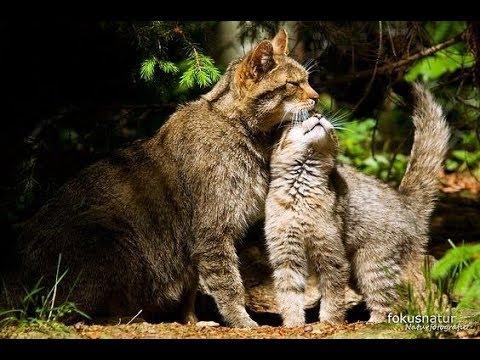 Вопрос: Кошка притащила 16 котят. Посоветуйте куда их распихать?