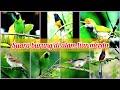Terapi Suara Gemercik Air Di Alam Untuk Relaksasi Burung Macet  Mp3 - Mp4 Download