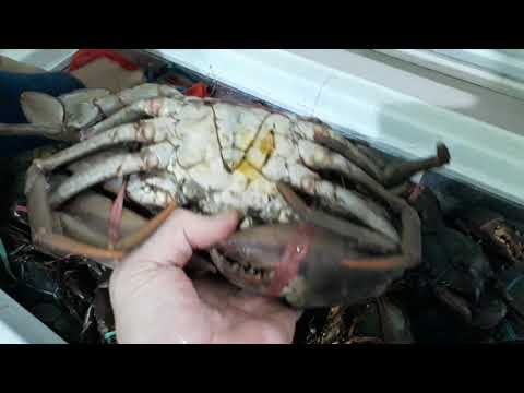 live-seafood-termurah-di-tangerang-dan-jakarta- -saloka-wisata