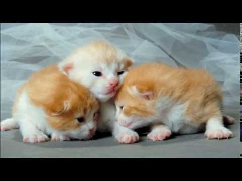 new born kittens sound effect