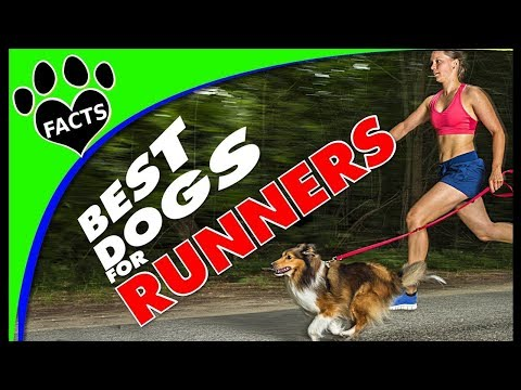 Top 10 Dog Breeds for Runners