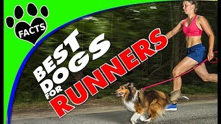 TopTenz: 10 Best Dog Breeds for Runners and Joggers - Animal Facts