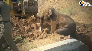 Baby Elephant Gets Pulled Out Of Water Tank
