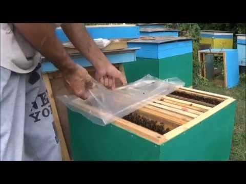 Применение Апифита для лечения варроатоза пчел
