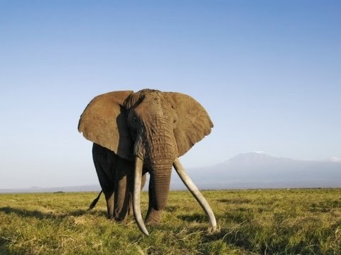 Africa's Elephant Kingdom HD