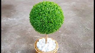 Cách trồng cây may mắn quả cầu - Hướng dẫn làm quả cầu may mắn tại nhà.