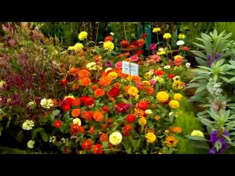 Flowers Show At Lalbagh Gardens Bangalore Youtube
