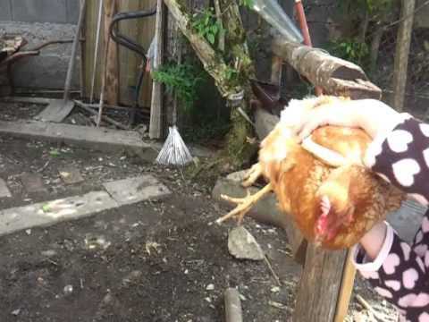 Pollaio fai da te 46 youtube for Casette per conigli fai da te