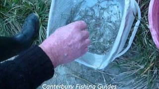 Canterbury Fishing Guides out Whitebait and Fishing.www.canterburyfishingguides.co.nz