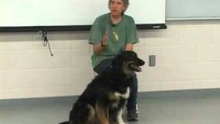 Dog Shelter Training - Predicting & Handling Aggression - Sue Sternberg