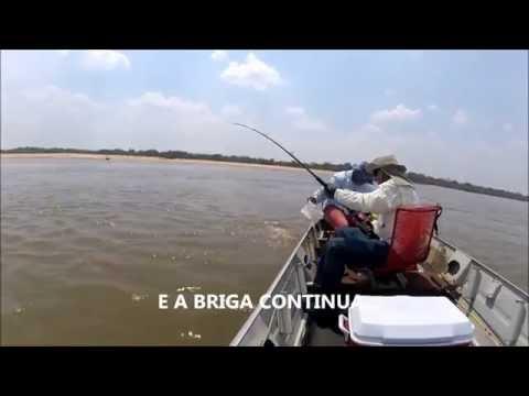 PESCARIA BRIGA COM PEIXE PIRARARA 45 KG RIO ARAGUAIA LUIZ ALVES GO  PESCA FISHING CATFISH