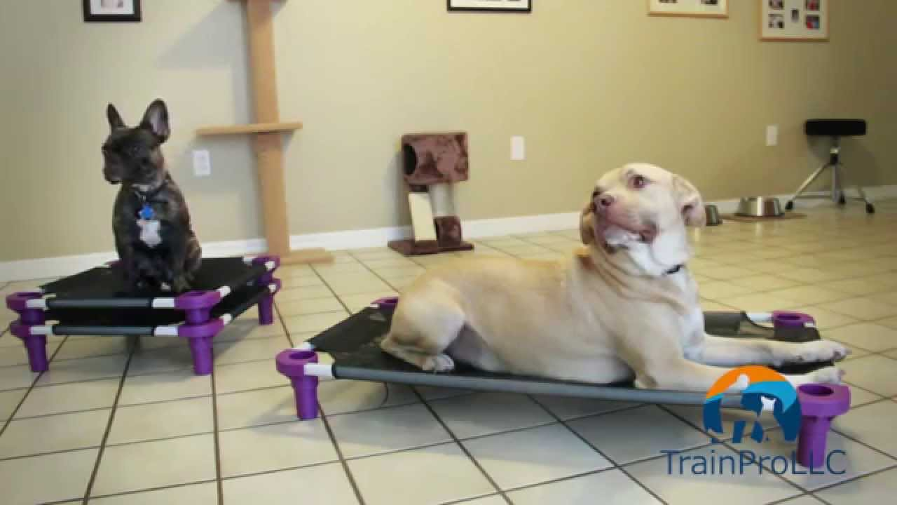 dog cot bed train pro sarasota trainer where to order