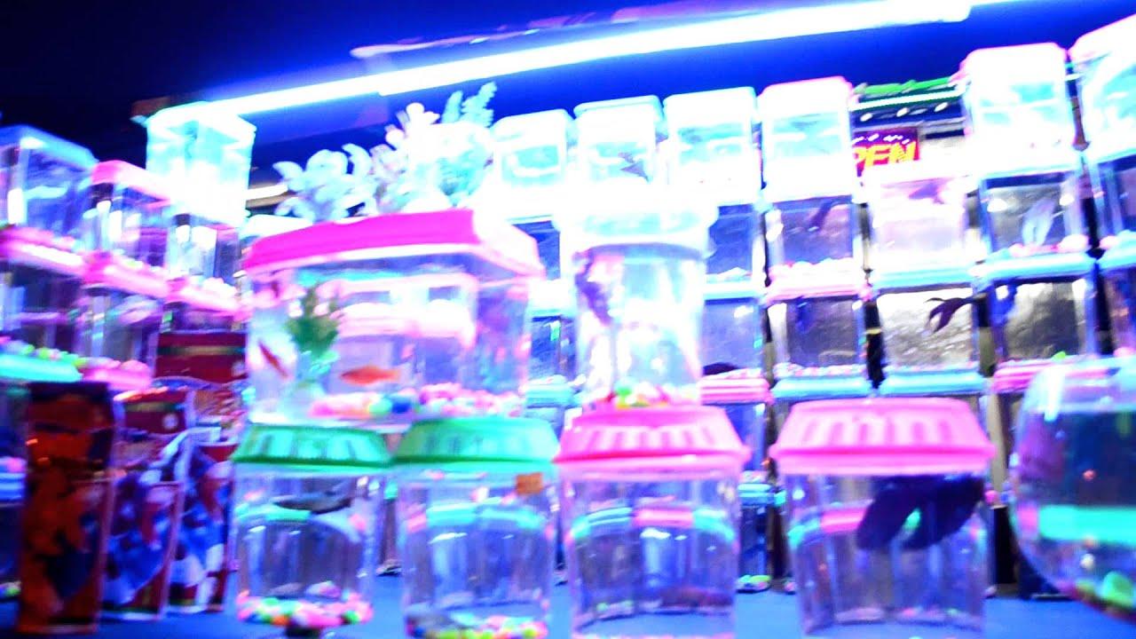 Fish aquarium in johor bahru - Betta Shop Aquarium Kedai Ikan