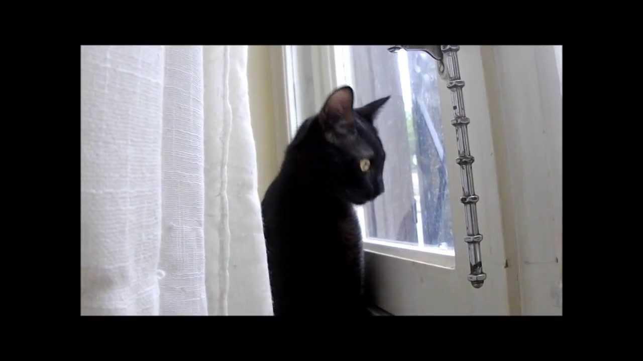 sonnerie chat qui miaule