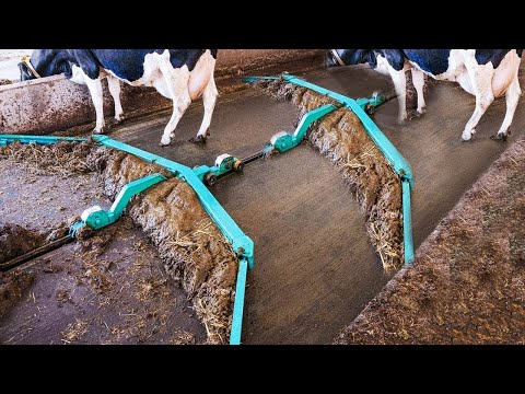 Amazing Modern Automatic Cow Farming Technology - Fastest Feeding, Cleaning and Milking Machines