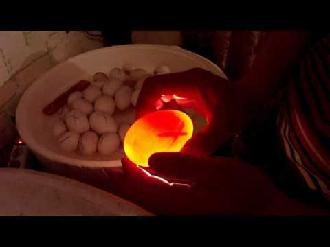 Как проверить гусиное яйцо на зародыш в домашних условиях видео