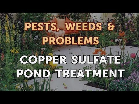 Copper Sulfate Pond Treatment