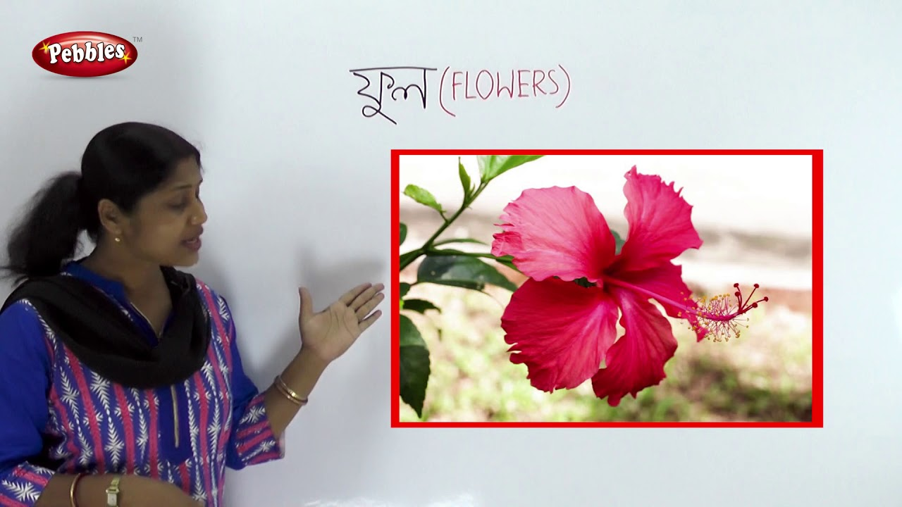 Preschool Bengali Bengali Flowers Name Flowers Name In Bengali Flowers Names Youtube