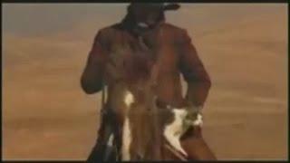 Как ковбои пасли котов