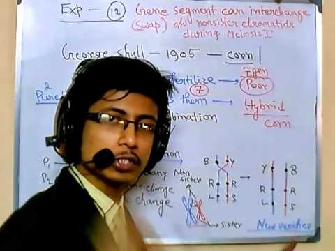 Genetics lecture 12 | Variation is important for evolution