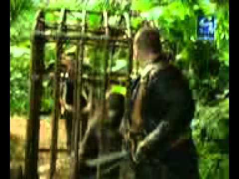 Download Funny Punjabi Gorilla